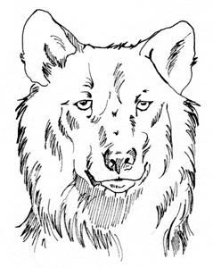 wolfshead