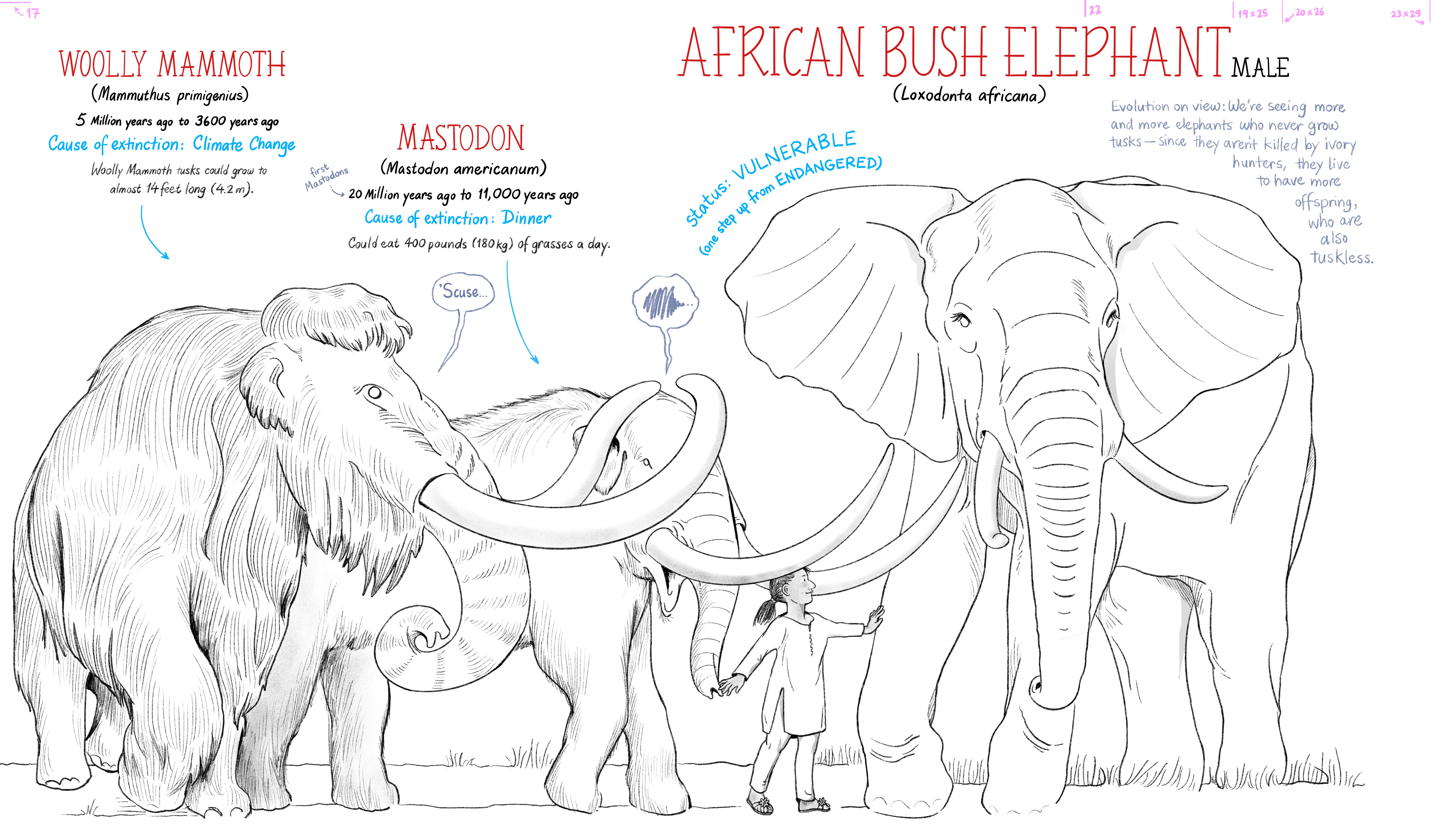 MEGA Megafauna: Elephant cousins